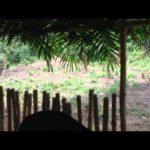 VIDEO: Ice Prince – Whiskey ft. Sunny Nneji (B-T-S)