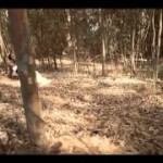 "VIDEO: Chidinma – ""Kite"""